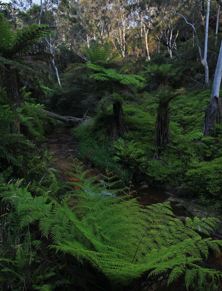 Ferns Stream View