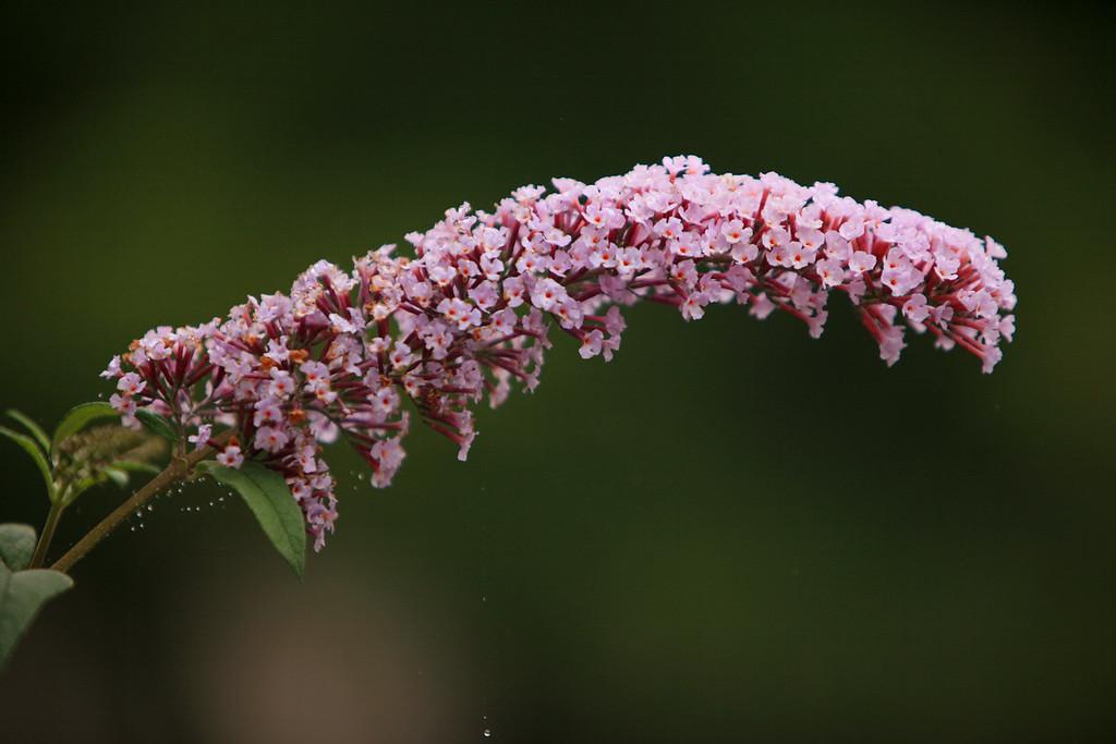 Purple Flower Raindrop