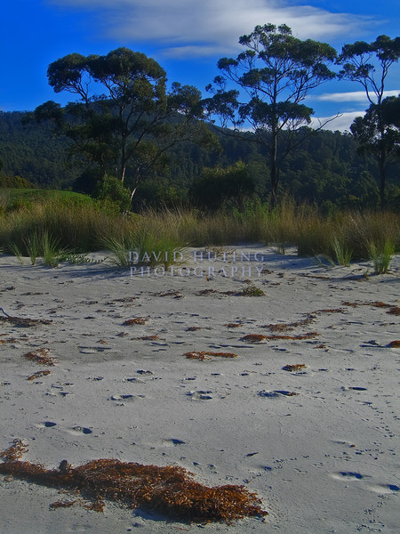 Colorful Tasmanian Beach View
