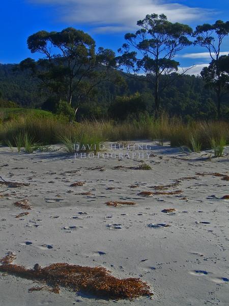 Colorful Tasmanian Beach View