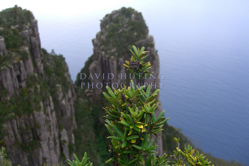 Macro on Top of the Mountain<br /> Maria Island, Tasmania