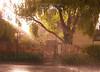 Rainstorm in the Sunshine <br /> Hobart, Tasmania