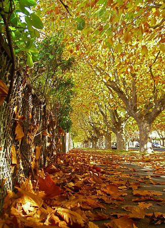 Fall Colors<br /> Hobart, Tasmania