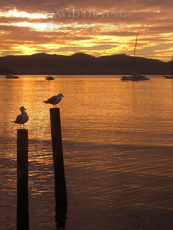 Golden Sunrise - Seagulls