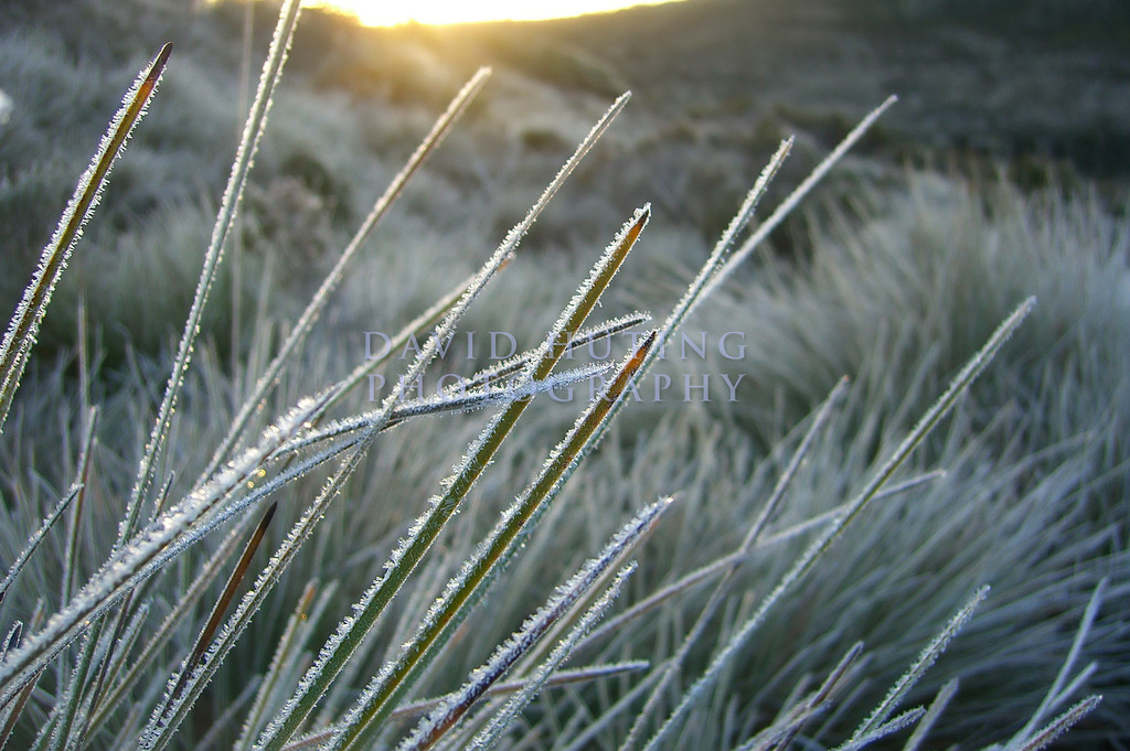 Frosty Sunrise Macro<br /> Cradle Mountain NP