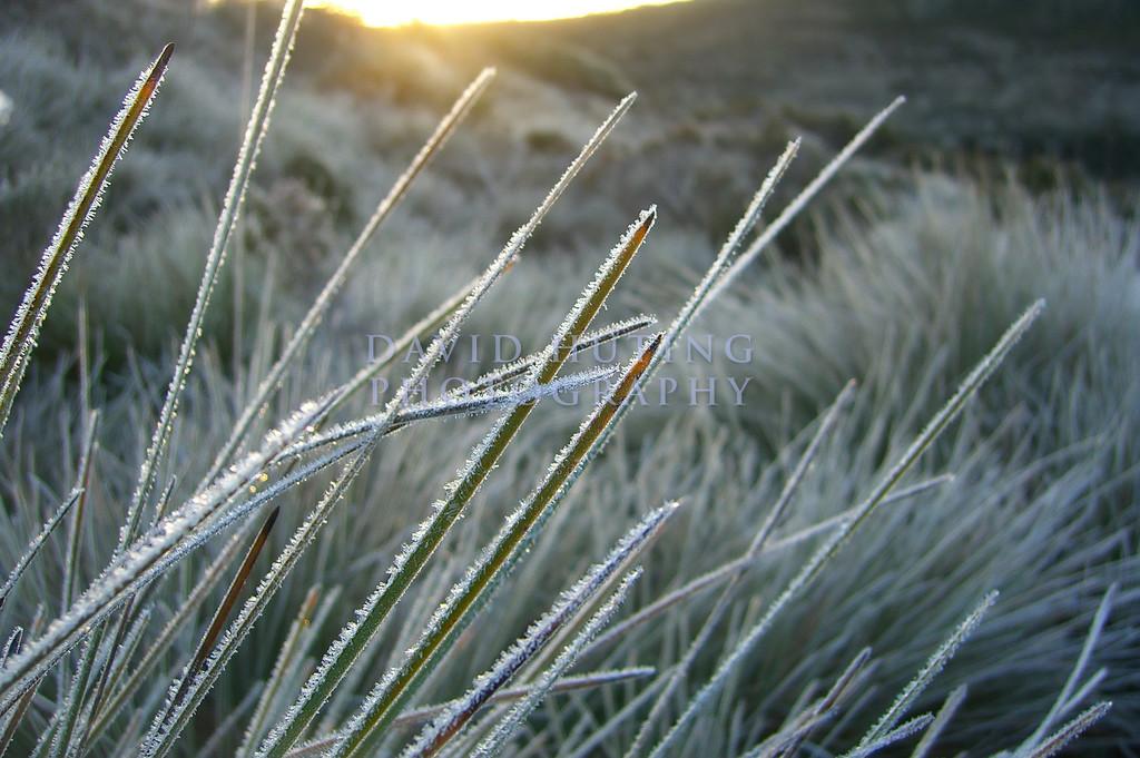 Frosty Sunrise Macro<br /> Cradle Mountain NP