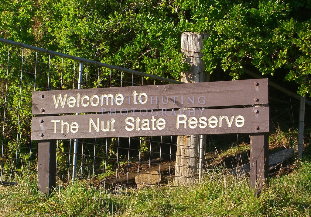 Welcome to the Nut