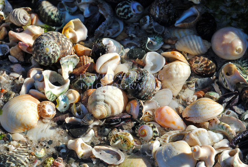 Colorful Shells <br /> Friendly Beaches, Tasmania