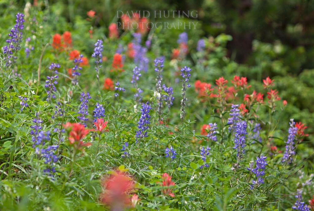 Red & Purple Wildflowersc