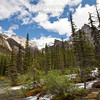 Flowing Forest - Moraine Lake