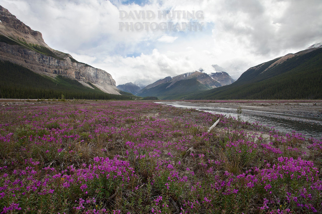 Wildflower Fields in Jasper