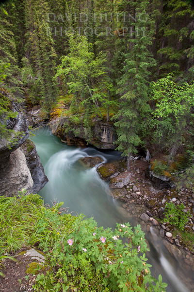 Maligne River Flowing - Purple Flowers