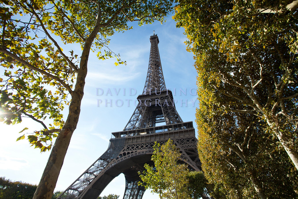 Eifel Tower Tree View