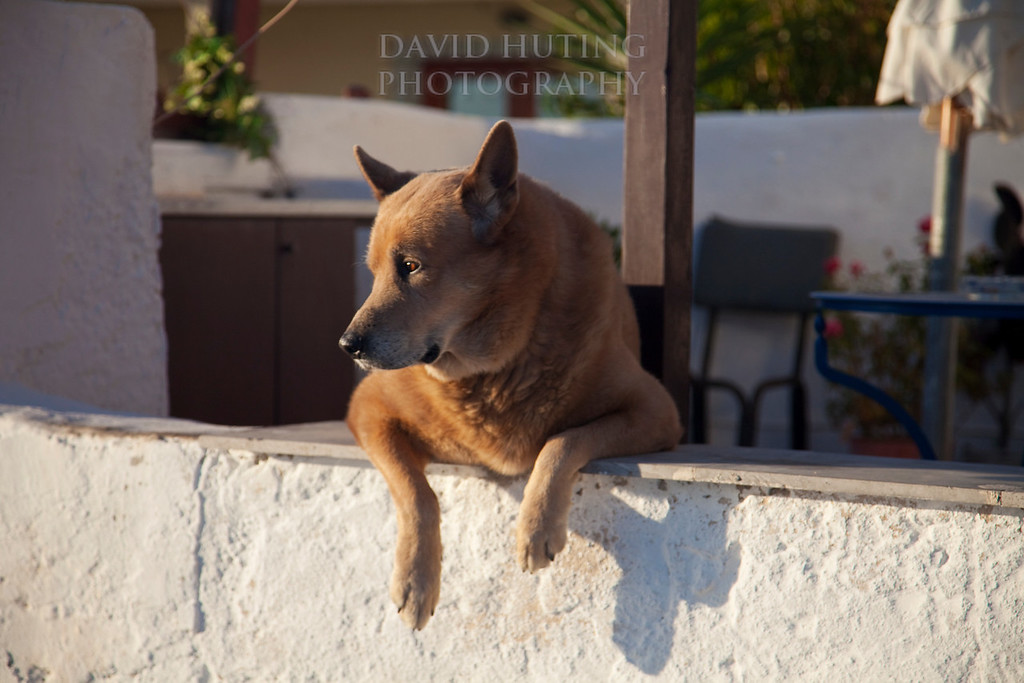 Santorini Dog chillin
