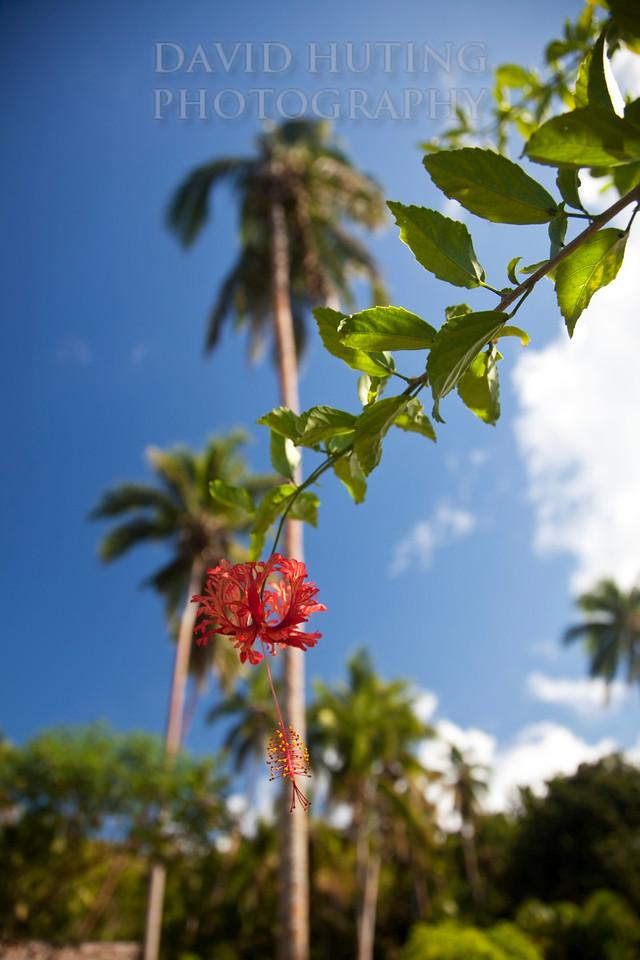 Paradise Flower Macro