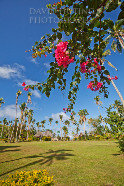 Mango Bay Pink Flowers Palm View