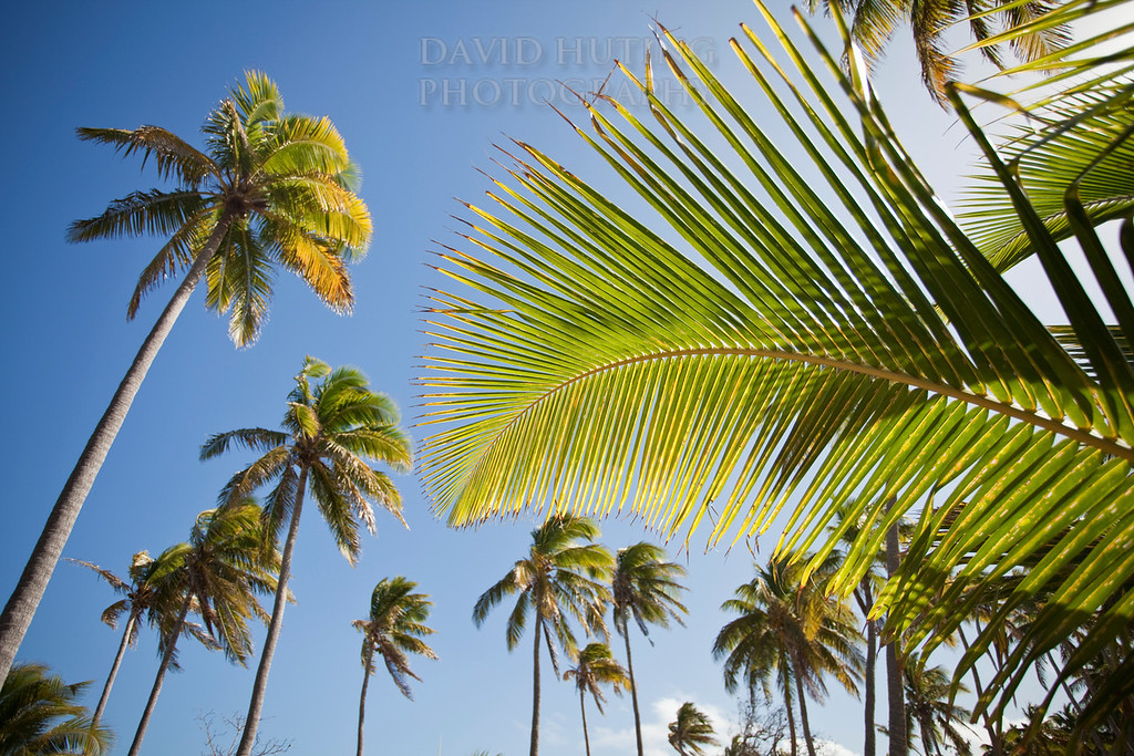 Palm Skies - Blue Lagoon