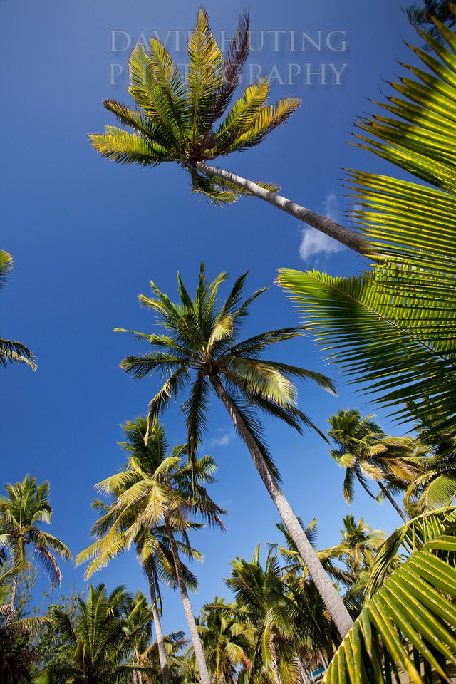 Palm Skies Vertical