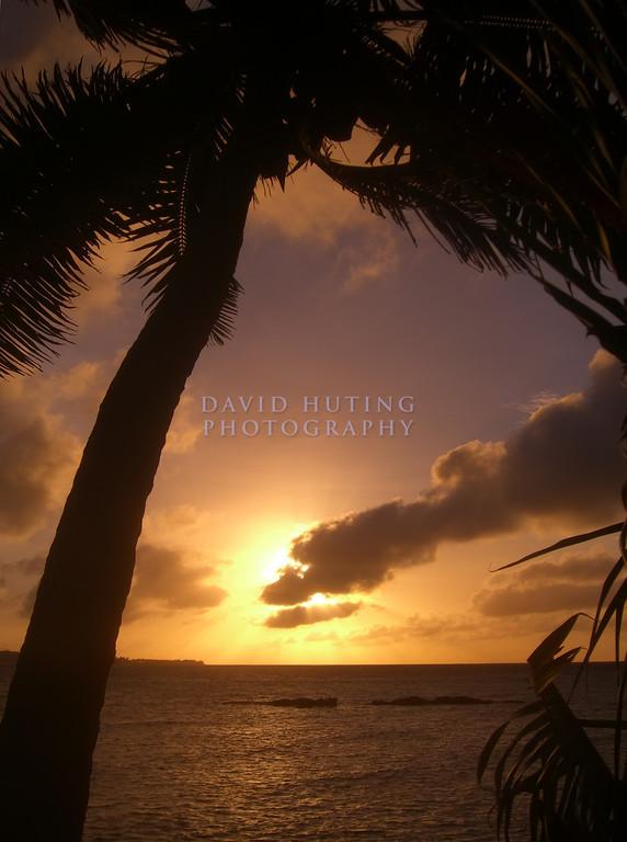 Palm Sunrise