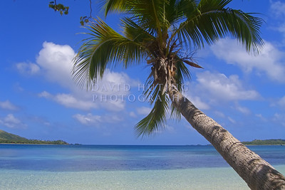 Blue Lagoon Palm Tree (20 x 30)