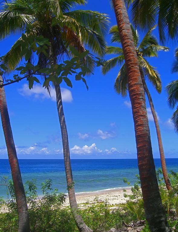 Colorful Island Scene, Fiji