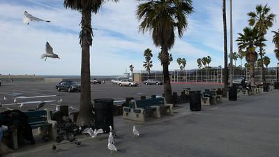 Venice Beach - 06