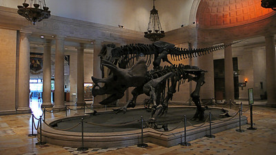 Museum of Natural History-LA - 12
