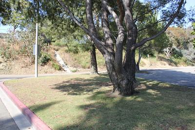 Culver City Desquesne Park