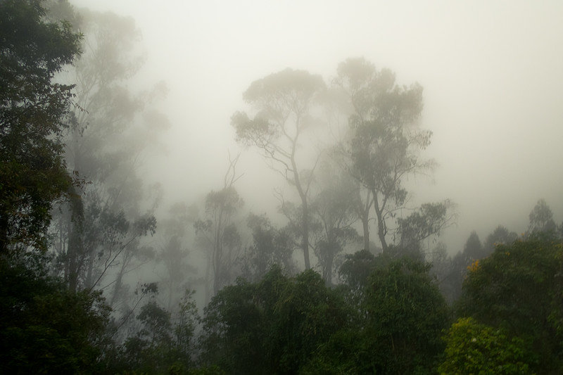 Forest Near Monserrate