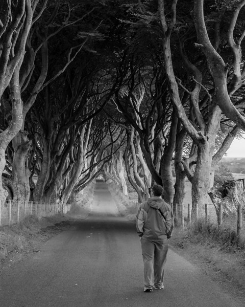 Walking Through the Dark Hedges