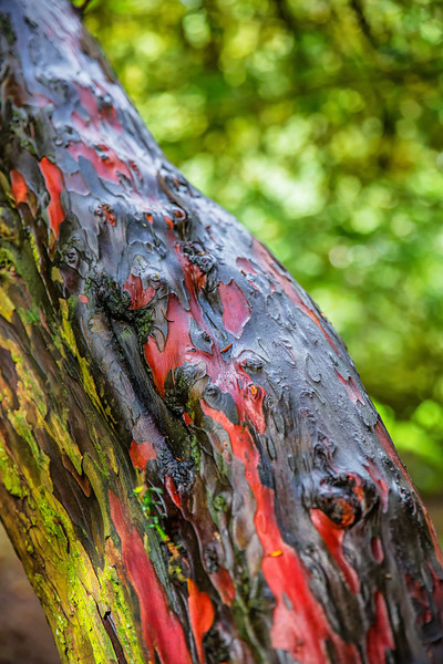Multi Colored Bark
