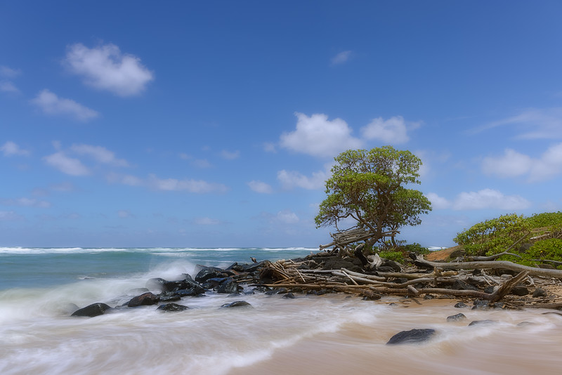 Tree at the edge of Lydgate Beach