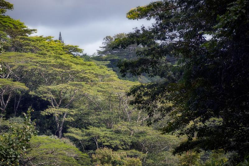 Forest on Kauai