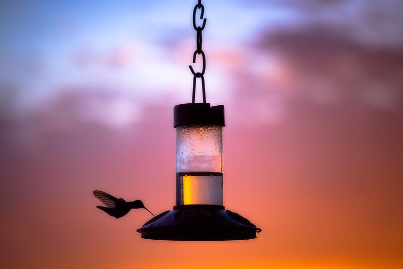 Silhouette of Hummingbird