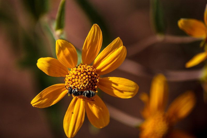 A wasp (with a bees attitude) flew onto flower I was taking picture of.