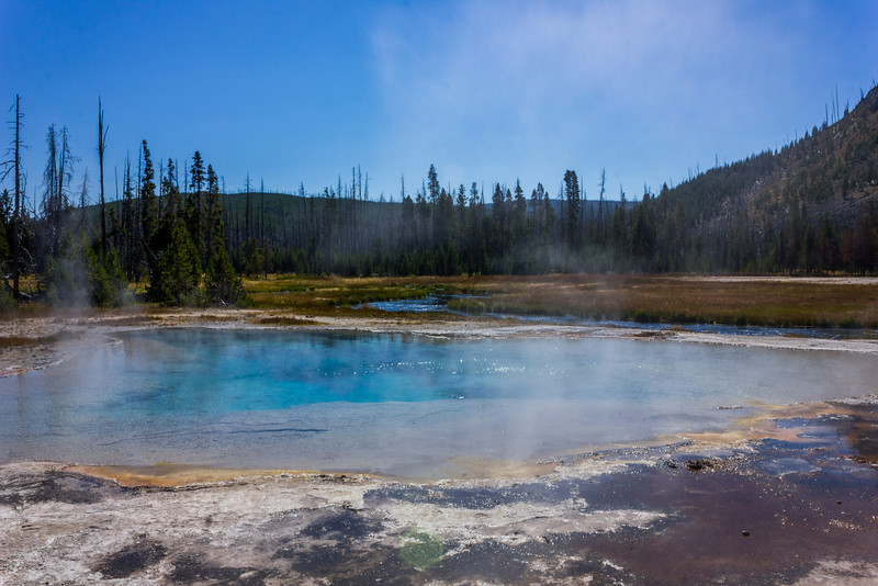 Green Spring in Yellowstone