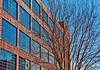 Durham_AmericanTobacco_Treeinfrontofwindows&brick_3102013