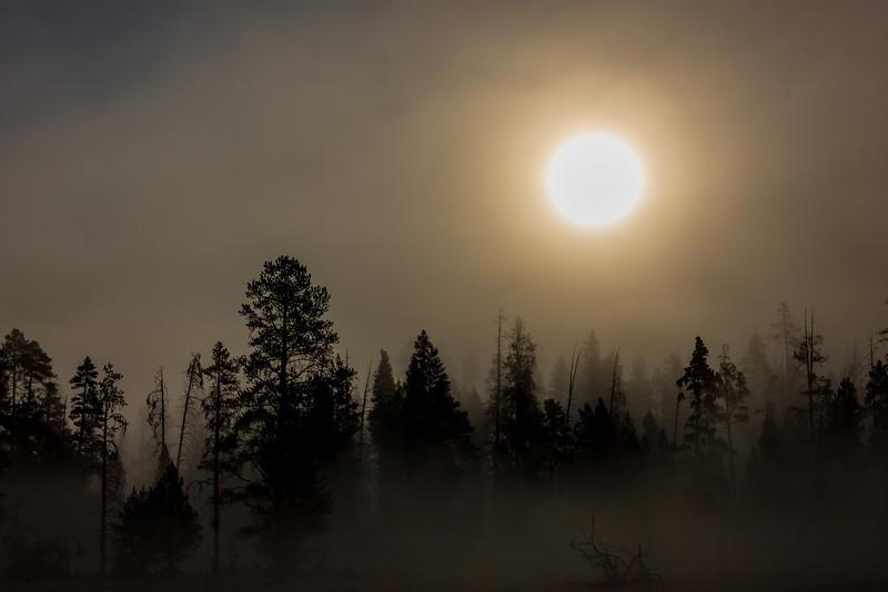 Heavy fog in Yellowstone