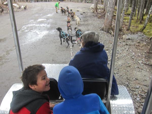 Alaska Cruise: Skagway Musher's Camp & Sled Dog Discovery