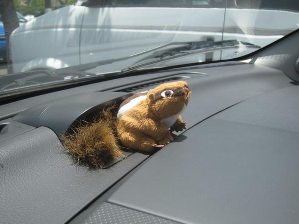 SquirrelMonk