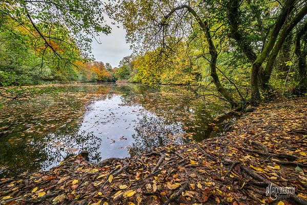 Nymans Woodlands Autumn