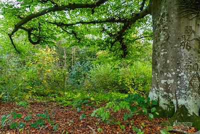 05 WT Denge & Pennypot Wood (c) Marion Sidebottom