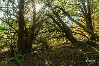 24 WT Denge & Pennypot Wood (c) Marion Sidebottom