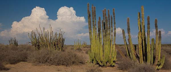 SON-2007-026: , Mpo. Caborca, Sonora, Mexico