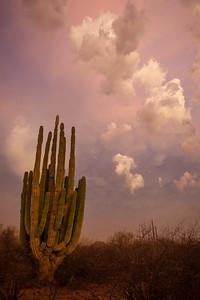 SON-2012-133: Las Conchas, Mpo. Hermosillo, Sonora, Mexico