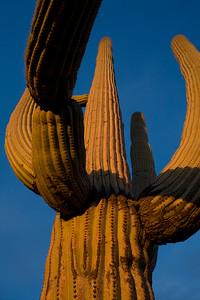 AZ-2008-015: Tucson, Pima County, AZ, USA