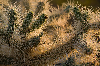 AZ-2007-067: Organ Pipe Cactus National Monument, Pima County, AZ, USA