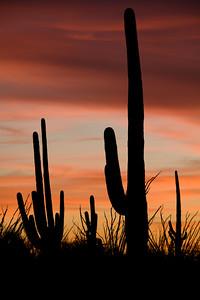 AZ-2008-019: Tucson, Pima County, AZ, USA