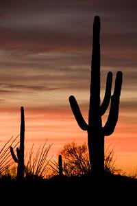 AZ-2008-023: Tucson, Pima County, AZ, USA