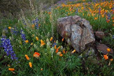 AZ-2010-081: Peachville Mountain, Pinal County, AZ, USA